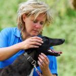 Spanningspatronen bij de hond