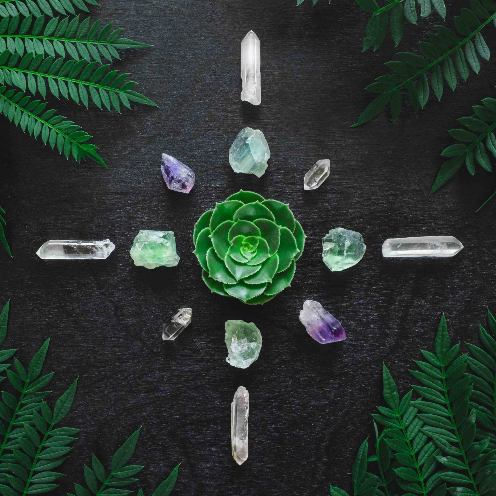 Aeonium and Crystal Grid on Black Table with Clear Quartz, Amethyst, and Fluorite