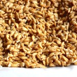 how-to-sprout-einkorn-wheat-berries