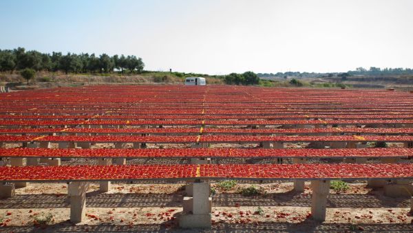 Sun Dried Tomatoes by BeeYond Travel