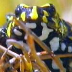 frogcorroboree1-rtr