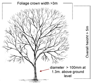Planting Diagram For Trees, Planting, Free Engine Image