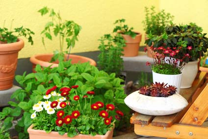 Balcony Gardening Planting Tips Container And Layout Ideas