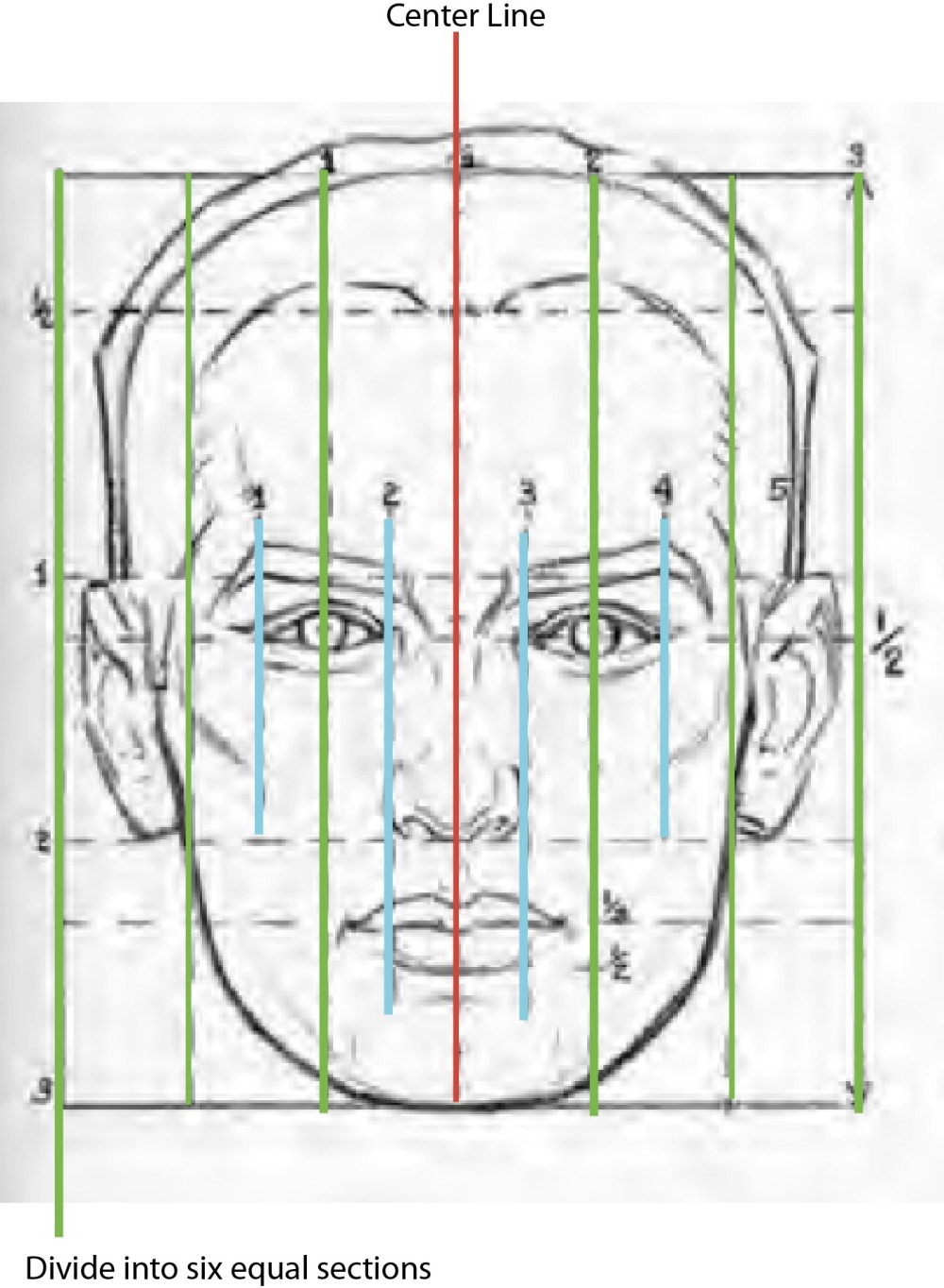 medium resolution of the vertical lines of the male head