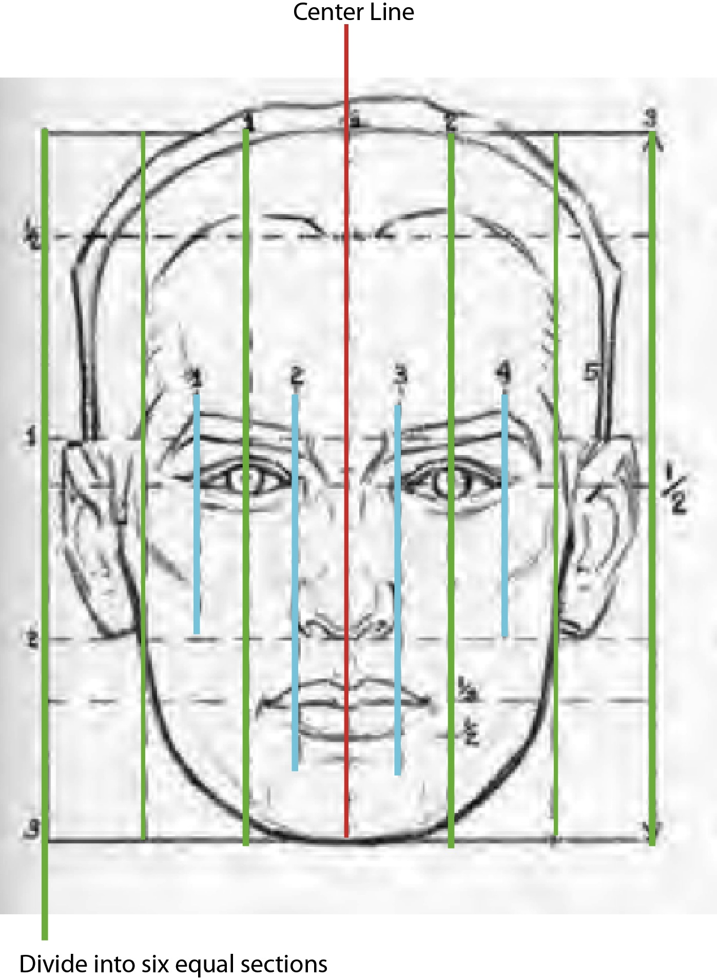 hight resolution of the vertical lines of the male head