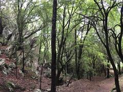 La Grotta del Romito