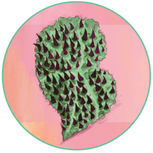 Logo rond feuille de begonia