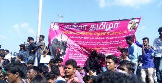 Jallikattu Protest | Students Refusing to Leave 6 Behind History
