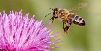 8 Super Facts about Honey Bees 5 Behind History