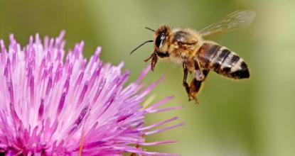 8 Super Facts about Honey Bees 13 Behind History