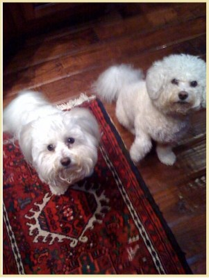 dogs on persian rug