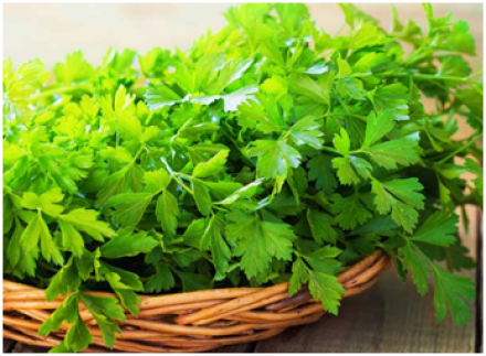 Parsley for urine infection