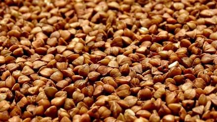 Buckwheat (Kuttu)