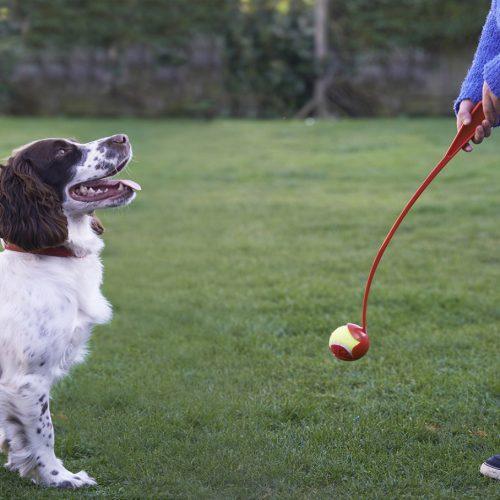 Girl Throwing Ball For Pet Spaniel Dog In Garden