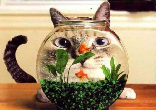 La Wlooo!!!…Wish To Be A Fish In 2011