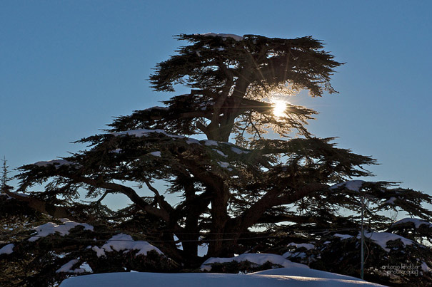 Autumn Escape and Winter Dream: The Cedars