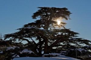 Autumn Escape and Winter Dream: The Cedars
