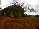 Ett religiöst träd dit man kunde lämna gåvor