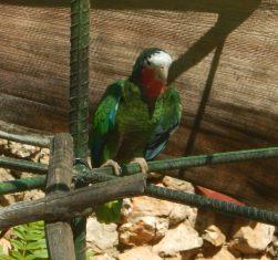 En spanande papegoja