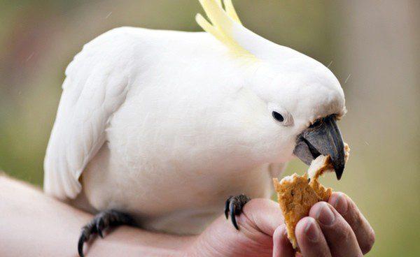 Cmo alimentar correctamente a un pjaro