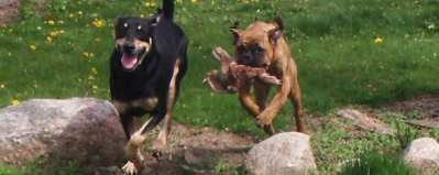 Dogy play time