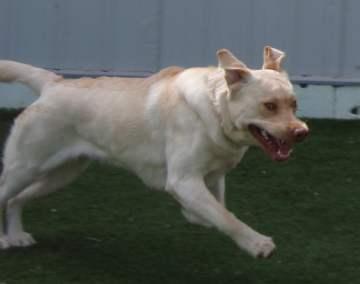Oakville dog kennel - We host all kinds of dogs.