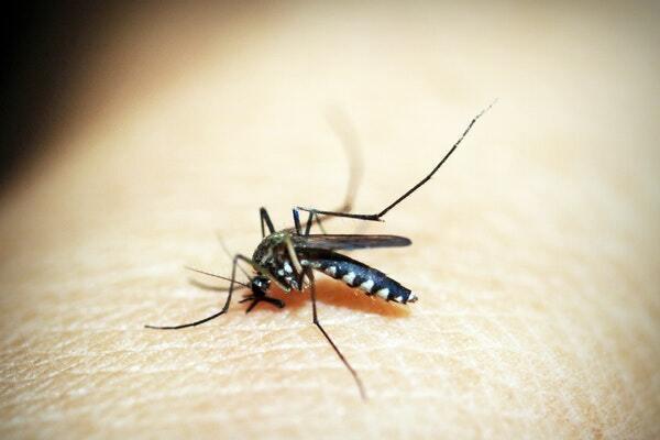 cara menghilangkan bentol gigitan nyamuk