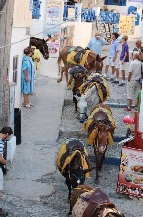 ride donkey, Things to Do in Santorini, Greece