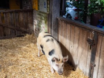 animal farm, Grounds-of-Alexandria-What-to-eat-in-Sydney-Australia, food in sydney, sydney must eat
