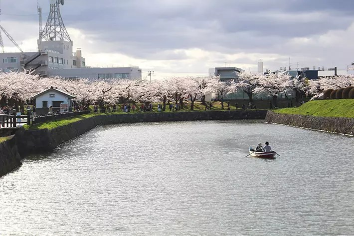 goryokaku river sakura cherry blossom Hakodate & Toya - 6-Day South Hokkaido Itinerary, hakodate itinerary, things to do in hakodate, what to do in hakodate, hakodate must eat