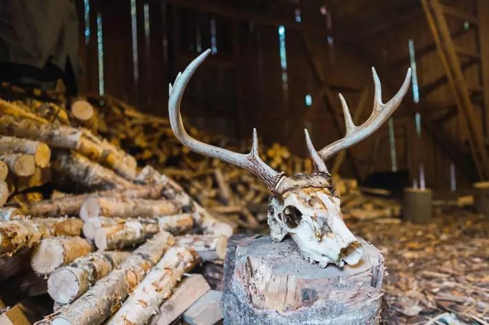 antelope, deer, reindeer, skull, Nuuksio National Park