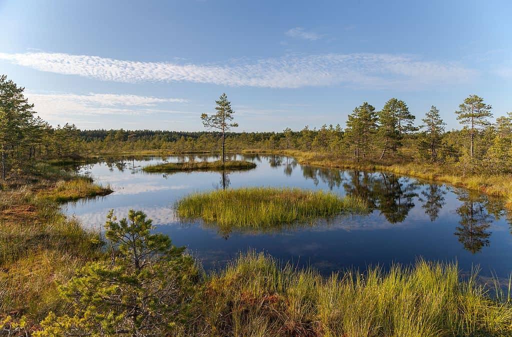 Viru_Bog,_Parque_Nacional_Lahemaa,Estonia