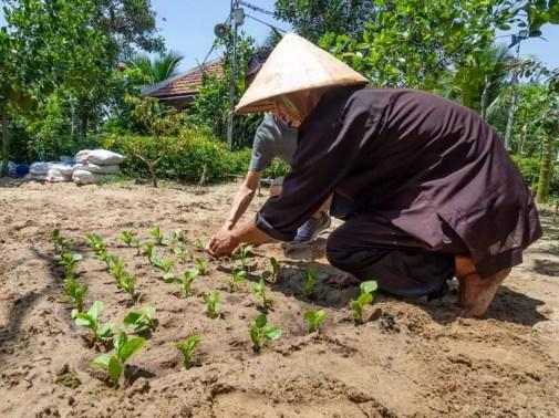 farm-Things-to-do-in-Hoi-An-Vietnam-16