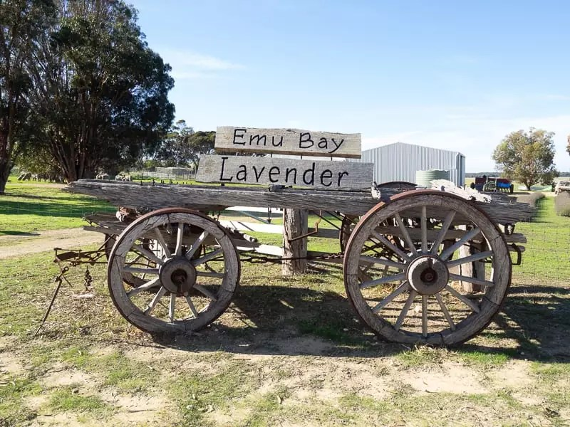 emu lavender farm-Things-to-do-in-Kangaroo-Island-Australia