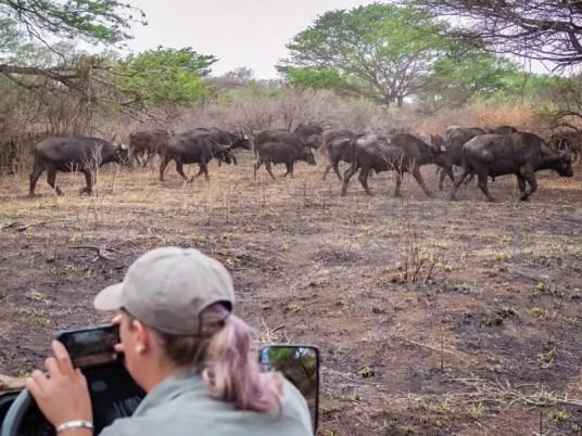 wildebeest, Rhino-River-Lodge-South-Africa-safari-game-drive
