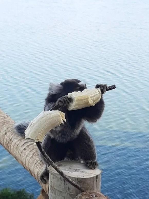 Pousada em Maricá rj barata - mico leão dourado