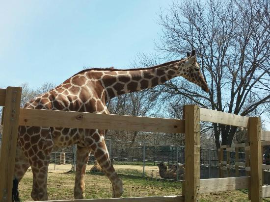 Zoo Lights Henry Vilas Zoo