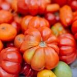 Graines-Semences vente en ligne
