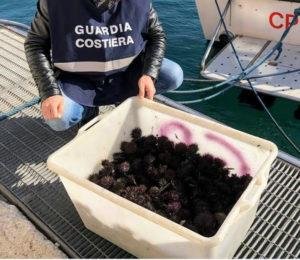 Favignana: sequestrati 400 esemplari di ricci di mare