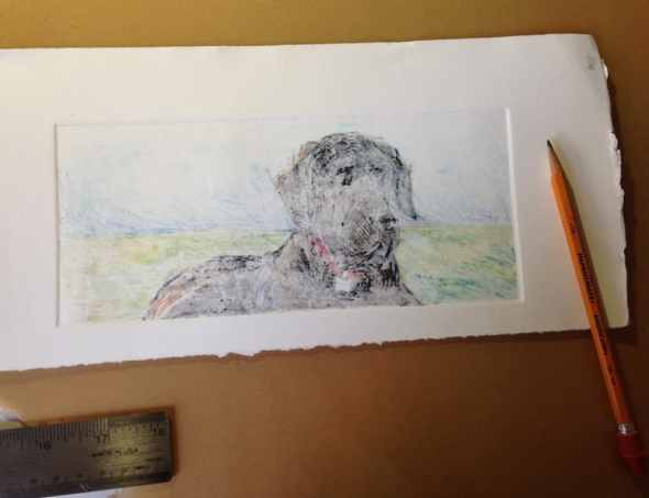 A faint outline of a great dane dog on paper with a pencil nearby, getting ready to add more saturated pigment to the art