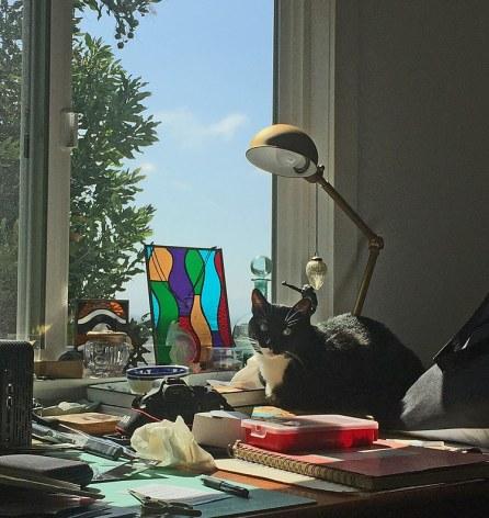 cats-in-the-studio