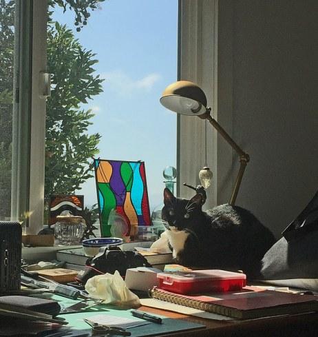 cat-in-the-studio