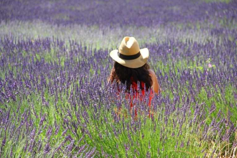 a woman sitting in a field of lavendar