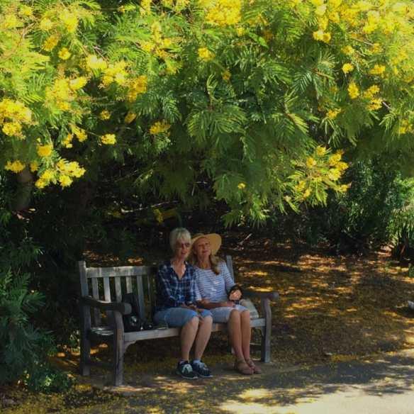 arboretumtrees