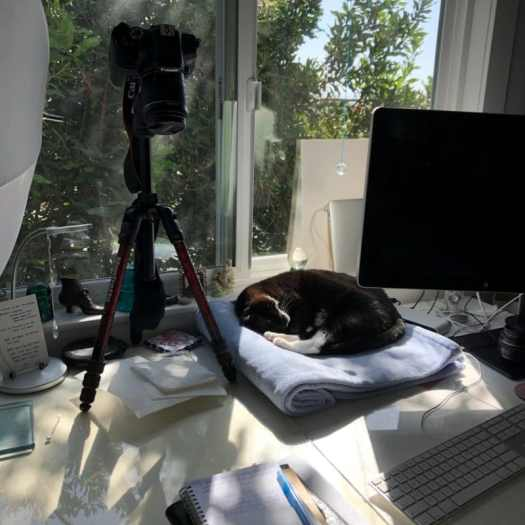 an art studio table with a computer monitor, a camera on a tripod and a sleeping cat