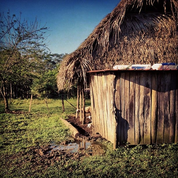 Thatched farm shack southern Belize