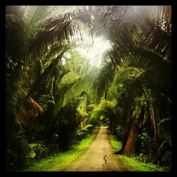 jungle road and trail in belize