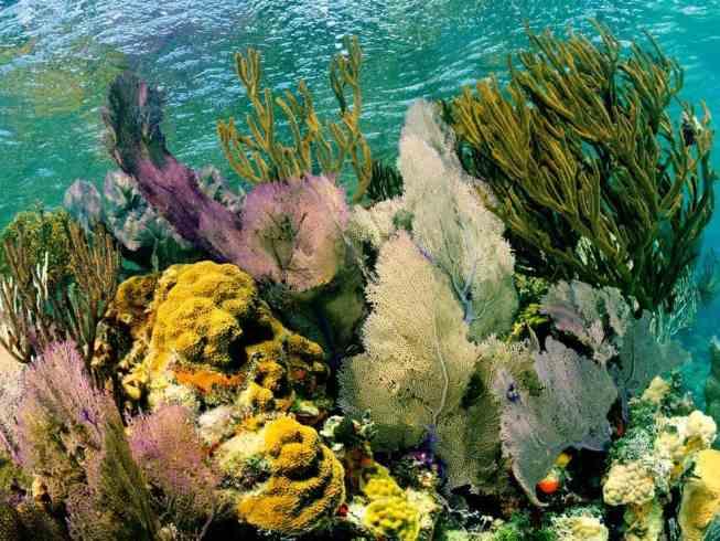 lighthouse reef belize