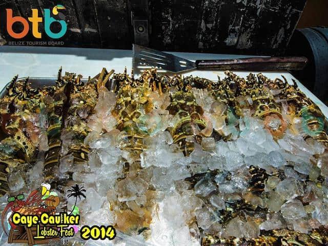 fresh lobster in belize