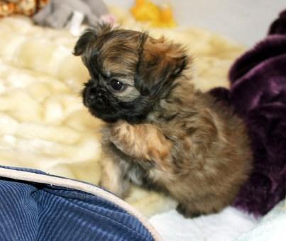 Hi cutie pie!